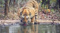 Ranthambhore Tiger Tour of Delhi Agra and Jaipur 5 Star Hotel, New Delhi, Multi-day Tours