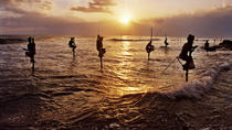 11 Days Of Tour Taprobane, Colombo, Multi-day Tours