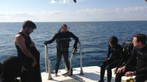 Dive Charter: Inshore Wreck and Bridge Span, Panama City Beach, Scuba Diving
