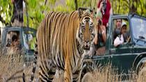 Private Tour: 2-Night Ranthambore National Park from Jaipur, Jaipur, Multi-day Tours