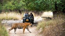 4 Days Fort-Palace-Tiger-Taj Mahal Tour-Jaipur-Ranthambore-Agra, Jaipur, Multi-day Tours