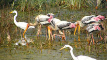 Day Trip to Bharatpur Keoladeo National Park and Abhaneri Stepwell from Agra Including Transfer ...