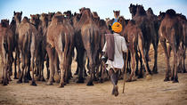 Private Day Trip to Pushkar from Jaipur With Transfer to Jodhpur, Jaipur, Private Sightseeing Tours