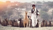 Private Day Trip to Pushkar From Jodhpur To Jaipur, Jodhpur, Private Day Trips