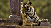 Private Overnight Tour of Ranthambore From Jaipur With Drop At Agra, Jaipur, Overnight Tours