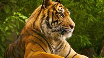 Private Tour: Overnight (2 Days) Ranthambore Tiger Safari Tour From Jaipur, Jaipur, Overnight Tours
