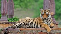 Private Wildlife Safari Tour in Ranthambore from Jaipur, Jaipur, Day Trips