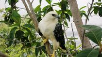 Amazon Bird Watching Tour, Manaus, Day Trips