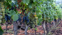 Etna Full-Day Wine Tour, Taormina, Full-day Tours