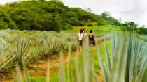 Hiking Adventure at Vinata Los Osuna, Mazatlan, 4WD, ATV & Off-Road Tours
