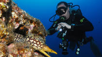 Scuba Diving Multi Dives in Playa de la Americas, Tenerife, Scuba Diving