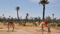 Palmeraie Sunset Camel Ride Experience from Marrakech, Marrakech, Nature & Wildlife