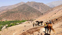 Half-Day Horse Riding Tour in Atlas Mountains from Marrakech, Marrakech, Half-day Tours