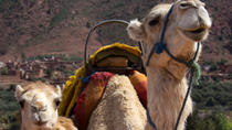 Private Camel Ride in High Atlas Mountains from Marrakech, Marrakech, Private Day Trips