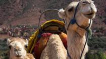 Randonnée privée en chameau dans les montagnes du Haut Atlas depuis Marrakech, Marrakech, Private Day Trips