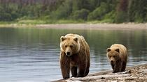 Bear Watching in Transylvania 2-Day Tour, Bucharest, Multi-day Tours