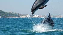 Arrábida Dolphins and Jeep Safari, Lisbon, 4WD, ATV & Off-Road Tours