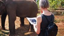One day elephant friendly program, Bangkok, 4WD, ATV & Off-Road Tours