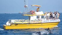 Dolphin Watching Excursion in Gibraltar, Gibraltar, Dolphin & Whale Watching