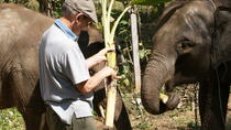 Full-Day Mahout's Life Experience , Chiang Mai, Day Trips