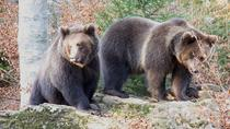 Bearwatching Day Tour in High Tatras from Poprad, Poprad, Private Day Trips