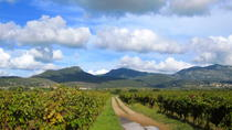 Private tour: Exclusive Wine Tour in Languedoc from Montpellier, Montpellier, Wine Tasting & Winery ...