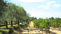 Small-Group Half-Day Languedoc Wine and Olive Tour from Montpellier, Montpellier