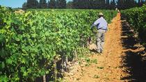 Small-Group Half-Day Languedoc Wine Tour from Sète, Montpellier, Wine Tasting & Winery Tours