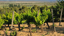 Small-Group Half-Day Picpoul de Pinet Wine Tour from Sète, Montpellier, Wine Tasting & Winery Tours