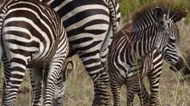 11-Day Safari Adventure in Southern Tanzania, Dar-es-Salaam