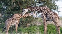 2 Days safari to Mikumi and Udzungwa Mountains from Morogoro, Dar es Salaam, Cultural Tours