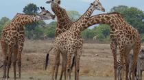 3 Days - Exploring Selous Game Reserve, Dar es Salaam, Multi-day Tours