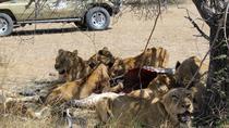 6 Days Safari to Selous - Mikumi - Udzungwa, Dar es Salaam, Safaris