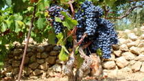 Hvar Wine Tour and Dalmatian Dinner, Hvar, Wine Tasting & Winery Tours