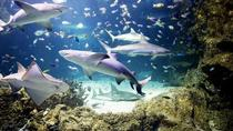 Split Sea Aquarium Tour with Transfer from Split, Split