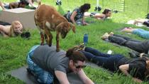 Goat Yoga in Picturesque Snohomish, WA, Seattle, Yoga Classes