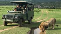 Day Safari at Pumba Private Game Reserve, Port Elizabeth, Safaris