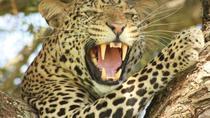 Tanzania Luxury Tented Camp Safari, Arusha, Cultural Tours