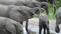 Tarangire National Park, Arusha, Attraction Tickets