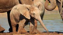 Full day Addo Elephant National Park tour from Port Elizabeth, Port Elizabeth, Attraction Tickets