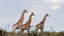 Half Day Kragga Kamma Safari in Port Elizabeth, Port Elizabeth, 4WD, ATV & Off-Road Tours