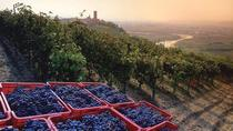Private Barbaresco Wine Tour, 1 full day for Discover vineyards and cellars, Langhe-Roero and...