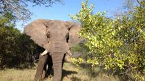 2-netters elefanttur fra Nelspruit, Kruger National Park, Multi-day Tours