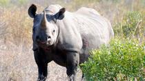 4 Day Rhino Tour, Kruger National Park, Multi-day Tours