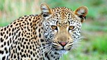 One Night Leopard Tour of Kruger National Park from Nelspruit, Kruger National Park, Overnight Tours