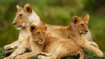 Nairobi National Park, Elephant Orphanage, Giraffe Center, Karen Blixen Museum or Bomas of Kenya ...