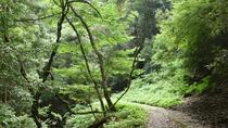 Hiking Adventure in Mt Kasuga Primeval Forest, Osaka, 4WD, ATV & Off-Road Tours