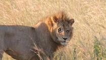 Half Day Nairobi National park, Nairobi, Attraction Tickets