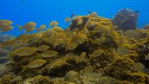 SNORKELING EXCURSION IN SOUTH TENERIFE - 3,5 HOURS, Tenerife, 4WD, ATV & Off-Road Tours