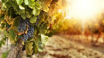 Amador County Wine Experience from Sacramento, Sacramento